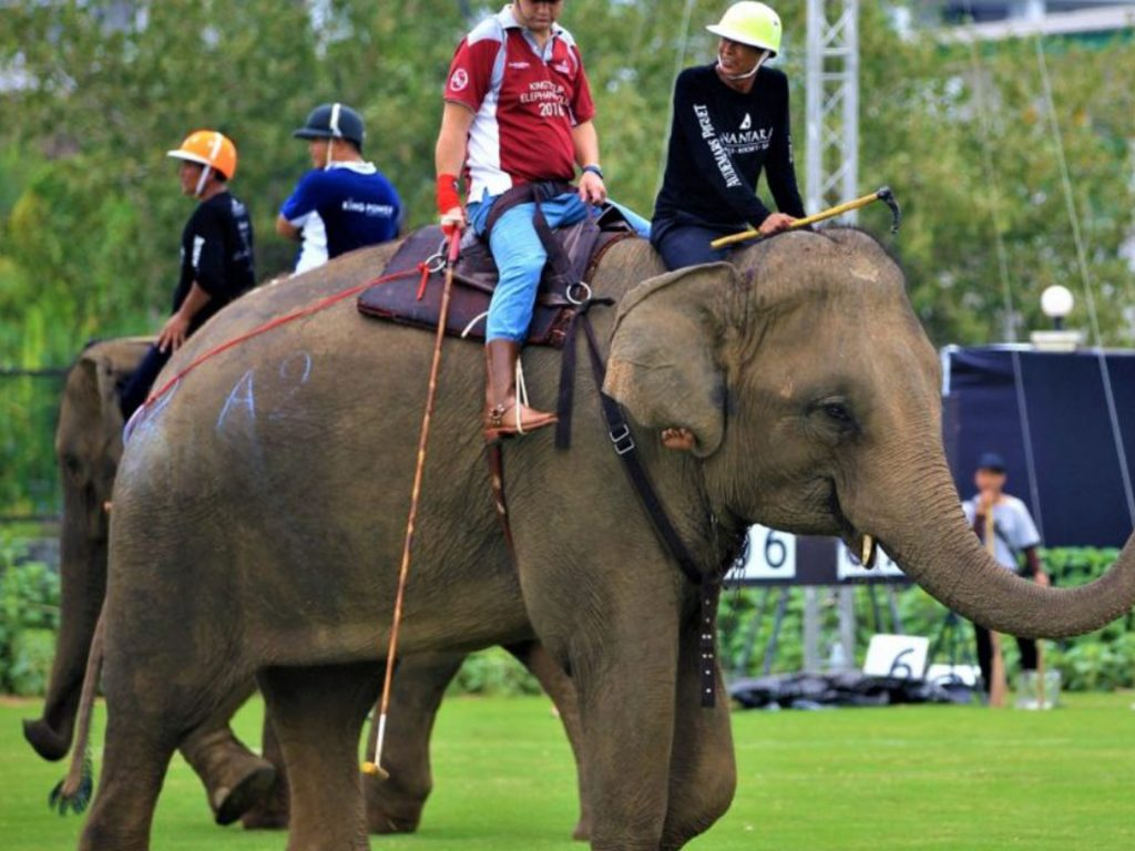 Two guys on top of the elephant holding pols playing elephant polo.