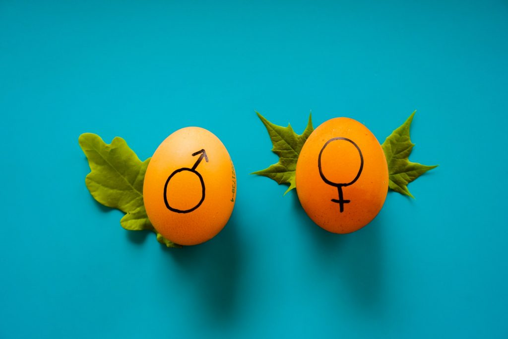 An orange egg with leaves behind them with drawing of male and female  gender symbol