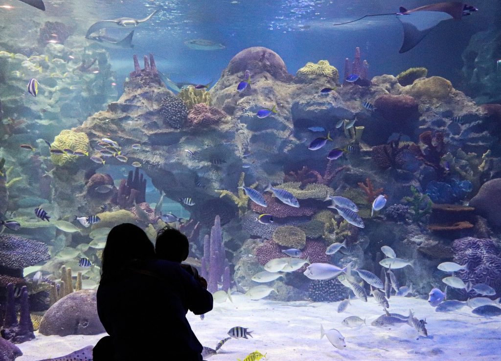 A mother carrying her child to see and enjoy the underwater world with fishes swimming around the big aquarium.