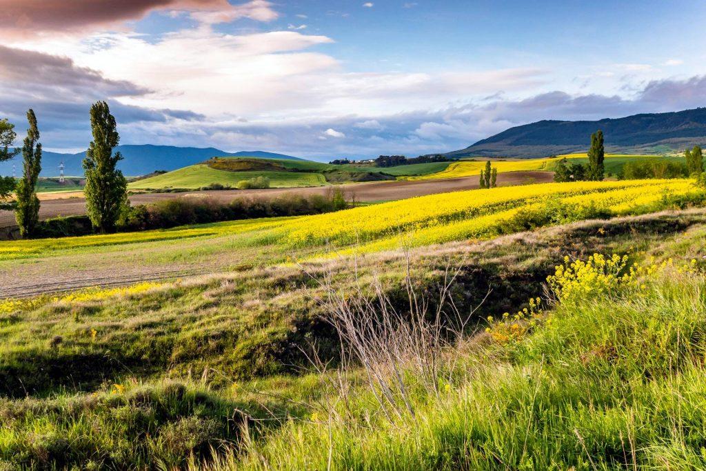 green grass field under blue sky during daytime photo