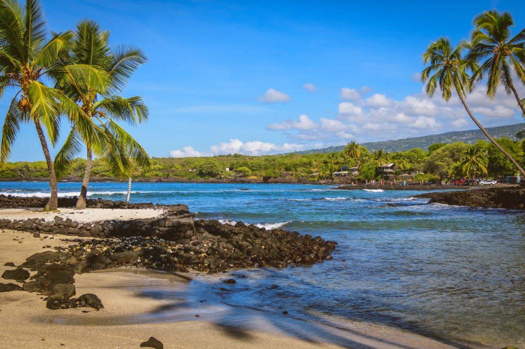 Coconut trees on island shore