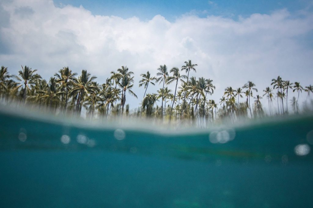 Mid-water shot showing water and coconut trees