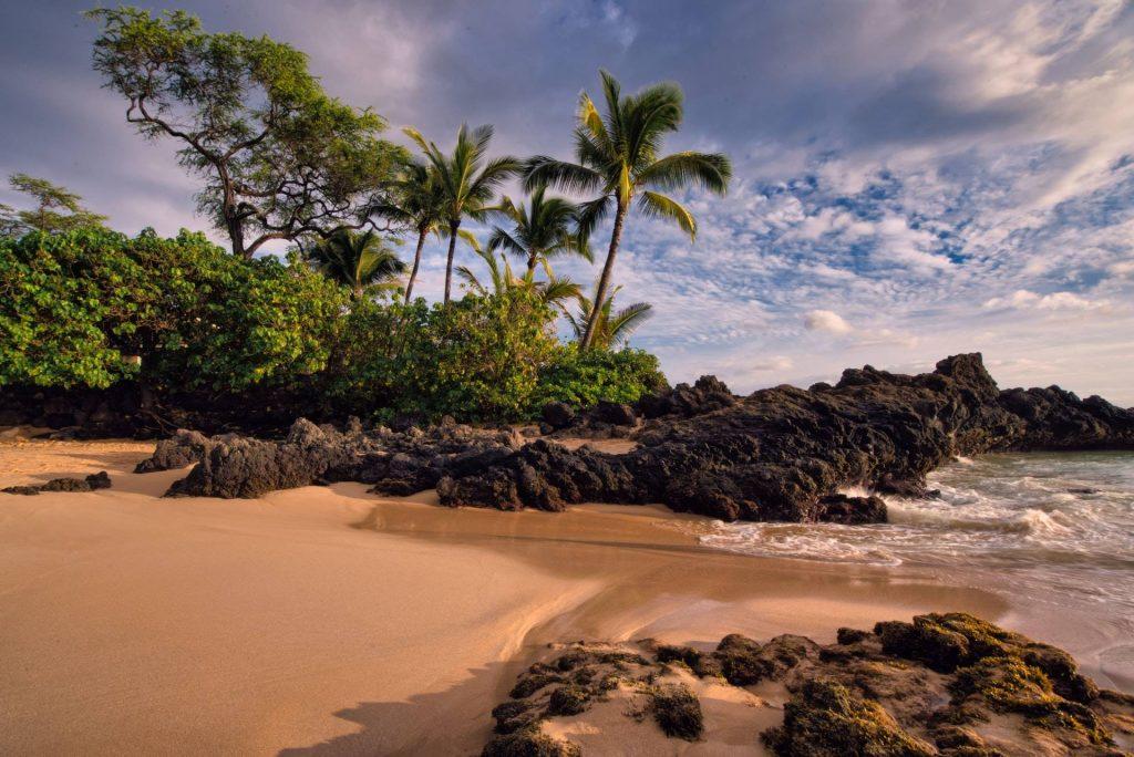 Seashore photo during day
